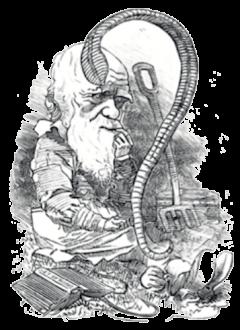 APM Boek, Darwins wormenboek